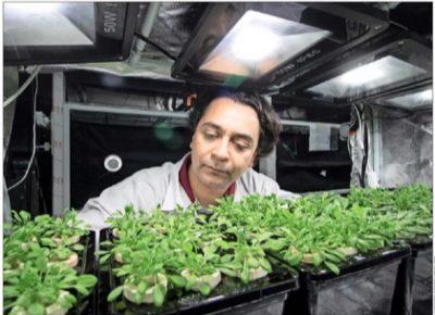 luz-y-plantas–400×290